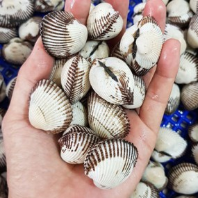 [AZA수산 1번지] 청정 갯벌, 벌교에서 온 국산 새꼬막! 1kg [남해바다향] 이미지