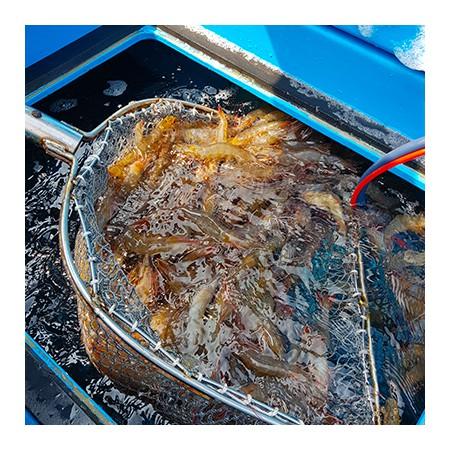 ( 9월28일 오후2시 추석택배마감 ) 신선MD 강추! 달고, 탱글한 육질!  국내산 흰다리 킹 왕새우 (생물) 1kg [남해바다향] 이미지