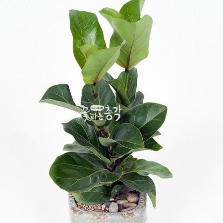 떡갈나무(소) 이미지