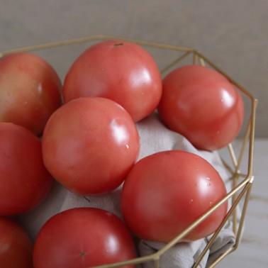 [조은영농] 친환경 무농약 토마토 2kg 이미지