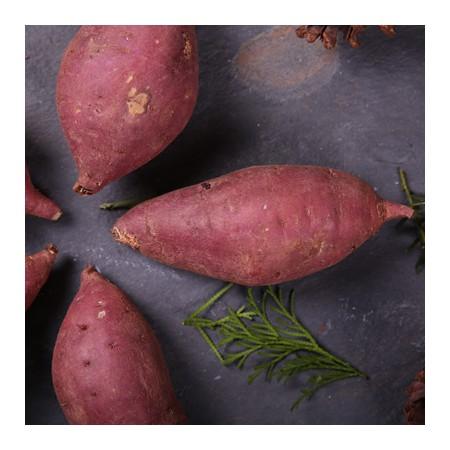 [조은영농] 스테비아 농법 유기농 꿀고구마 3kg 이미지