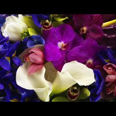 [아자몰 오픈특가][갤러리 플로바리스] 프리미엄 플라워 캔버스 작품 - Studio Flowers 이미지