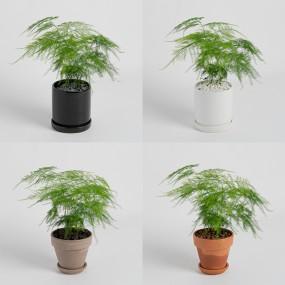 [식물농장] 아스파라거스 미니화분 작은 숲을 보는듯한 아기자기한 식물 이미지