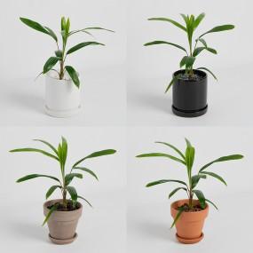 [식물농장] 관음죽 미니화분 암모니아 흡수를 잘해서 화장실에 두면 좋은 식물 이미지