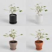 [식물농장] 무늬 벤자민 고무나무 미니화분 분위기 있는 하얀 무늬 이미지