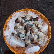 국산 자연산 새조개 (껍질만 손질) 생물 500g [남해바다향] 이미지