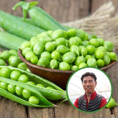 [산지직송] 20년 수확 김은주님의 국내산 완두콩(껍질채배송) 1kg/2kg/3kg