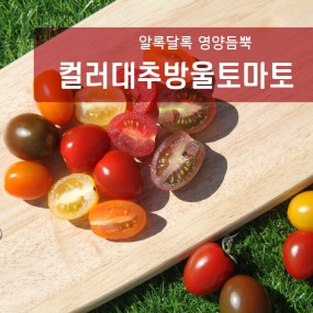 ★제철의 제맛★ [눈으로 먹고, 몸으로 먹는] 컬러대추방울토마토 1.5kg [과일친구] 이미지