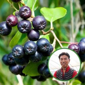 [산지직송] 전북 고창 김은주님의 냉동 무농약 아로니아 2.5kg(특품) 이미지
