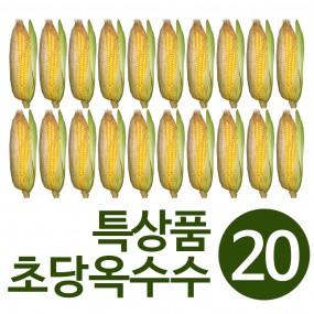 자연직송 찌지 않고 바로먹는 초당옥수수 특상품(16cm이상) 20개  무료배송 이미지