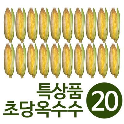 자연직송 찌지 않고 바로먹는 초당옥수수 특상품(16cm이상) 20개  무료배송
