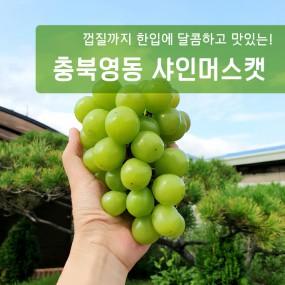 포도계의 에르메스!!! 포도의 본산 충북영동 샤인머스켓 2kg(3~4수) 이미지