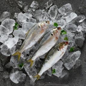 [삼삼해물] 거제도 자연산 전어 500g (10~11마리) / 횟감용 이미지