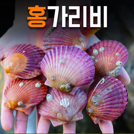 제철의 제맛! 드디어 출시! 통영 홍가리비 4kg(온가족 풍성하게~) [남해바다향] 이미지