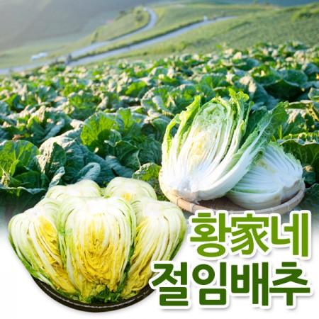 [김장원정대]20년 김장준비시작~[예약판매][황家네]강원도 고랭지 절임배추20kg(박스당 7-10포기)