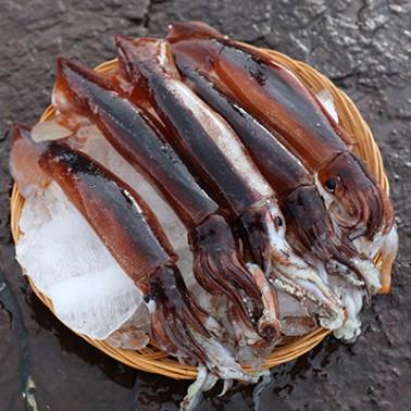 쫄깃하고 녹진녹진 ~ 입에 촥촥 감기는 급냉 국산오징어 5마리(총 700~800g 내외) [남해바다향] 이미지