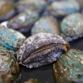 작지만 강한 영양소의 집합체! 살아있는 명품 완도참전복 1kg 20~30미 (소 size) [남해바다향] 이미지