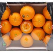 맛 좋고 몸에 좋은 향긋 달콤 오렌지 (3kg, 5kg) [키노팜] 이미지