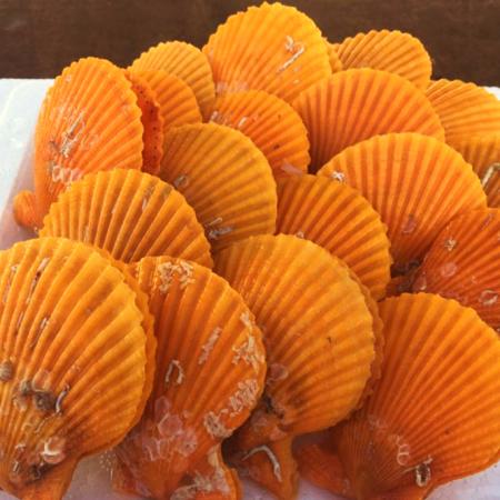 [핫딜][정서방네] 가황 통영 황금 가리비 3kg 이미지
