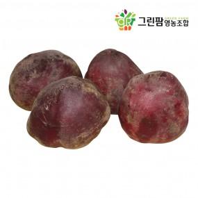 [그린팜] 컬러 푸드의 힘! 특별한 붉은 야채, 친환경 재배 비트 (3kg / 5kg) 이미지