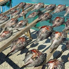 쫀득하고 감칠맛이 끝내주는 반건조 우럭 [대] 4마리 [ 마리당 250g 내외] [남해바다향] 이미지