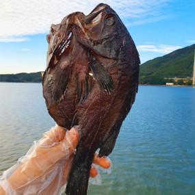 담백하고 쫀득한 밥반찬의 대명사 국산 반건조 우럭 [대] 1마리  [ 250g 내외 ] [남해바다향] 이미지