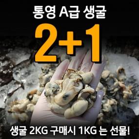 [지팔자] ★신년감사제 2탄★ 생굴 2+1(2kg 구매하시면 1kg 덤으로 생굴 받고 행복하소!) 아자수산1번지 [남해바다향] 이미지