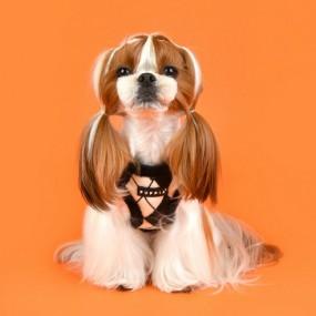 [퍼피아] 강아지 아몬드 반려애견 하네스B 2종 (베이지/블랙) 이미지