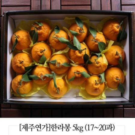 당도와 과즙이 풍부한 제주연가 황금빛 한라봉 (3kg, 5kg) [키노팜] 이미지
