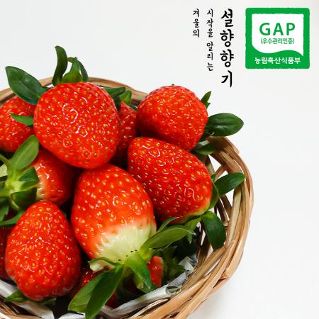 [설향향기] GAP 홍성 설향 딸기 800g이상 (무료배송)