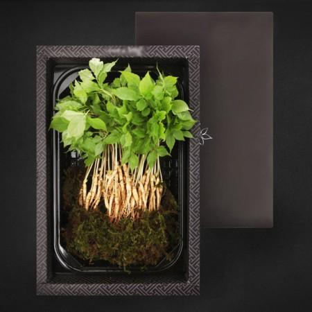 [산지직송] 담양 새싹삼 일반 선물세트 미니 100뿌리(13~15cm내외) 이미지