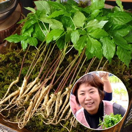 [산지직송] 담양 새싹삼 고급 선물세트 100뿌리(18~20cm내외)