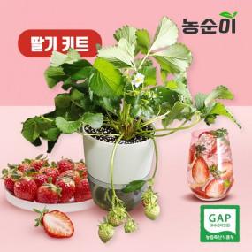 [농순이]가정에서 직접 수확하는 딸기 키트 1ea 이미지