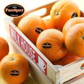 퓨어스펙 블랙라벨 고당도 오렌지 (7.2kg/36과 이내) 이미지