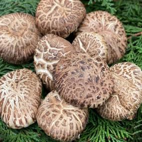 [해남송암표고농장] 해남 송암 유기농 표고버섯 5kg 이미지