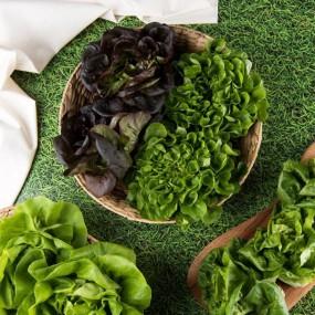 [고급유럽채소] GAP인증 당일수확 모듬쌈/샐러리 (400g/1kg) 이미지