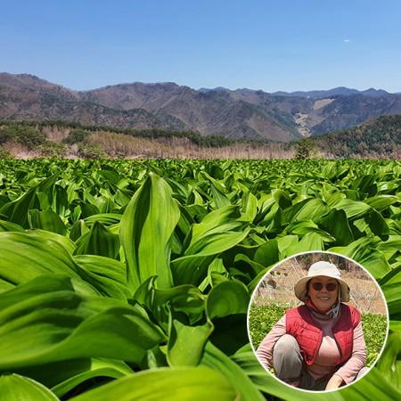 [산지직송] 강원도 해발 1000m 정선 민둥산 초고봉! 정선 고랭지 명이나물 1kg (줄기포함)