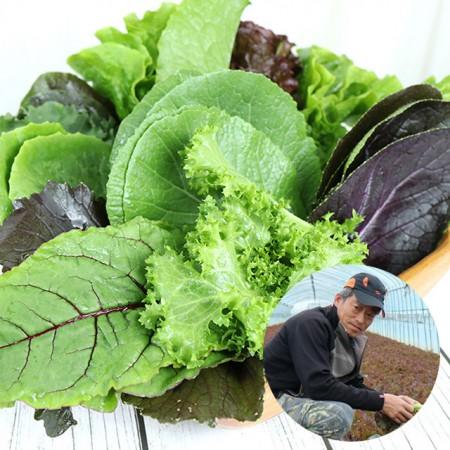 [산지직송] 유기농기능사가 재배한 경북 예천 모듬 쌈 채소(상추포함 13여종) 1kg