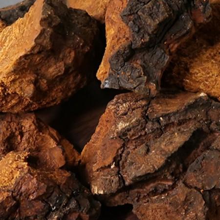 [아자픽] 브라운시크릿 러시아 시베리안 차가버섯 추출분말(50g) 이미지