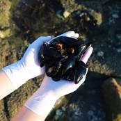 포장마차에서 먹는 그맛 그대로 자연산 홍합 (생물) 1kg [남해바다향] 이미지