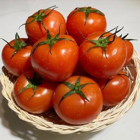 스테비아 토마토 2kg 이미지
