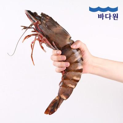 바다원 킹블랙타이거 새우 350g (32cm이상 1미)
