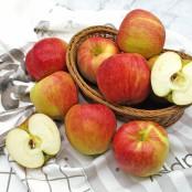 아삭하고 맛있는 사과 1.5kg, 2.5kg 선택 [자연두레] 이미지