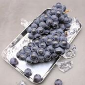 새콤달콤한 캠벨포도 1.2kg, 3kg 선택 [자연두레] 이미지