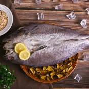 프리미엄 반건조 자연산민어 (초특대) 1마리 50~55cm 1~1.2kg 제수용으로 인기만점 ! [남해바다향] 이미지