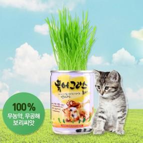 허글 펫데이즈 퓨어그라스 고양이 보리 1캔 / 헤어볼 배출 이미지