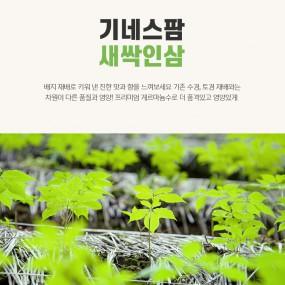 [추석PICK] 기네스팜 게르마늄수 천연 재배 새싹인삼 100뿌리 이미지