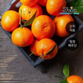 [제주낭] 당일수확 제주도 햇 노지감귤 10kg 대과 (70과내외) 이미지