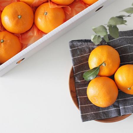 [설이왔소] 특가찬스! [진원] 새콤달콤한 향 제주 천혜향 선물세트 3kg 5kg 이미지