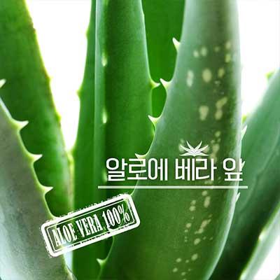 거제에서 산지직송! 유기농 알로에  베라 생잎 5kg